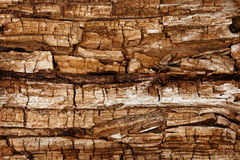 Completely rotted wood. The surface of completely rotted wood Royalty Free Stock Photography