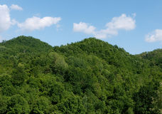 Completely unspoilt wooded hillside Royalty Free Stock Images