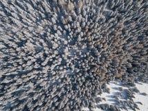 Completi giù la vista aerea del fuco del legno innevato dopo le precipitazioni nevose Alpi italiane Fotografia Stock Libera da Diritti