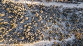 Completi giù la vista aerea del fuco del legno innevato dopo le precipitazioni nevose Alpi italiane Fotografia Stock