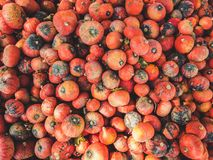 Completi giù la vista su un mazzo di zucche dell'Hokkaido fotografia stock