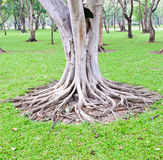 Complex root Stock Photo