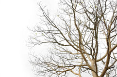 Complex tree Royalty Free Stock Photos