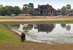 Complexe d'Angkor Wat Temple, Cambodge Images stock