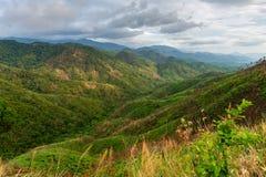 Complexidade da paisagem da montanha e diversidade da árvore da floresta com as baixas nuvens bonitas em superior - ervas daninha fotografia de stock royalty free