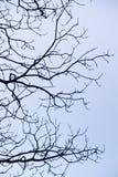 complexité sur des branches d'arbre photo libre de droits