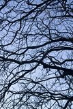 complexité sur des branches d'arbre image stock
