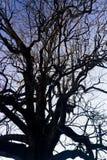 complexité sur des branches d'arbre photo stock
