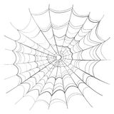 Complicated spider web on white Stock Image