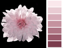 Complimentary pink color chart Royalty Free Stock Images