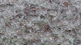 Complot congelado das formigas fotografia de stock