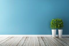 Complot de fleur blanche et intérieur bleu de mur Photos libres de droits