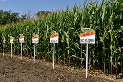 Complot de maïs de sed de Dekalb photo libre de droits