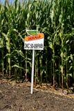 Complot de maïs de sed de Dekalb photographie stock libre de droits