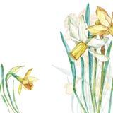 Compoition del fiore dell'acquerello nasals illustrazione vettoriale
