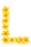 Componente gialla del blocco per grafici del frangipani Immagine Stock