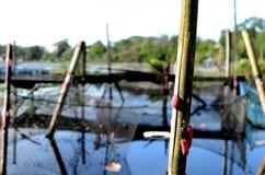 Comporre di bambù delle uova della lumaca dei pali del lago pesca le questioni ambientali della gabbia che distruggono il lago Fotografia Stock Libera da Diritti