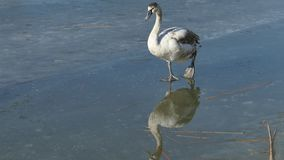 Comportamento degli uccelli stock footage