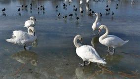 Comportamento dos pássaros vídeos de arquivo