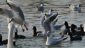 Comportamiento de los pájaros almacen de metraje de vídeo