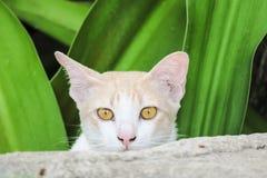 COMPORTEMENT DE KITTY CAT Photos libres de droits