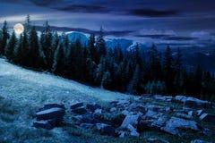 Composé alpin de paysage d'été la nuit dans la lumière de pleine lune photographie stock