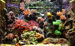 Aquarium exotique coloré Image libre de droits