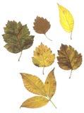 Composé des lames d'automne Photo libre de droits