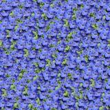 Composable Muster der Anemone nahtlos Lizenzfreie Stockfotografie