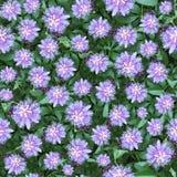 Composable Muster der Neigungsblume nahtlos Lizenzfreie Stockbilder