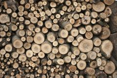 Composed of sawn wood. Background texture stock images
