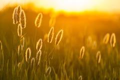 Composição abstrata com grama selvagem Foto de Stock