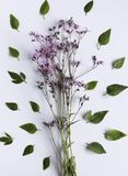 Composição abstrata da flor Fotografia de Stock