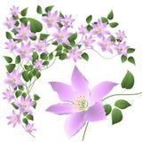 Composição abstrata decorativa com flores e l Imagens de Stock