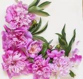 Composição angular de flores da peônia e das folhas verdes em um fundo branco fotos de stock royalty free