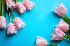 Composição bonita com as tulipas para o dia do ` s da mãe Foto de Stock Royalty Free