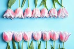 Composição bonita com as tulipas para o dia do ` s da mãe Fotografia de Stock