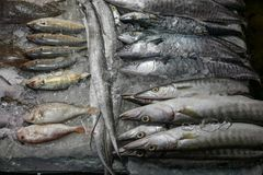 Composição bonita com peixes e gelo Fotos de Stock Royalty Free
