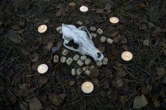 Composição bonita do Dia das Bruxas com runas, crânio, tarô e velas na grama no ritual escuro da floresta do outono Fotografia de Stock Royalty Free