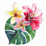 Composição bonito bonita tropical erval floral verde bonita brilhante do verão de Havaí de um flo amarelo branco cor-de-rosa verm ilustração royalty free