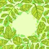 Composição circular das folhas verdes decorativas ilustração stock