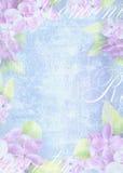 Composição clara macia do fundo com a flor lilás delicada Fotografia de Stock Royalty Free