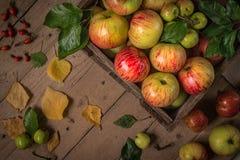 Composição com as maçãs frescas na tabela de madeira velha Fotografia de Stock