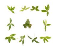 Composição com folhas verdes Fotos de Stock