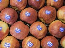 Composição com maçãs frescas fotos de stock