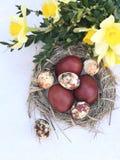 Composição com os ovos marrons coloridos da galinha e de codorniz no ninho fotos de stock