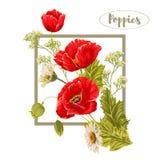 Composição com papoilas e camomilas Ilustração do vetor Fotografia de Stock Royalty Free