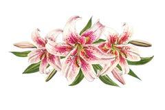 Composição cor-de-rosa bonita do lírio Ramalhete das flores C?pia floral Desenho do marcador ilustração do vetor