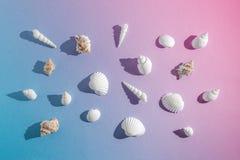 Composição criativa com as conchas do mar no fundo cor-de-rosa do inclinação e azul pastel Conceito mínimo do verão imagens de stock
