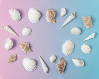 Composição criativa com as conchas do mar no fundo cor-de-rosa do inclinação e azul pastel Conceito mínimo do verão imagem de stock